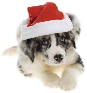 Chemvet-Newsletter-Vol-38-Dog Worming Tabs.jpg